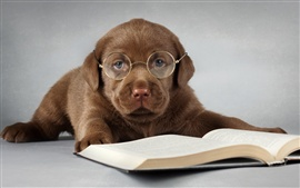 Preview wallpaper Labrador dog, brown, read a book, glasses