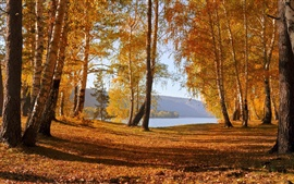 Preview wallpaper Nature autumn scenery, yellow leaves, trees, lake, mountains