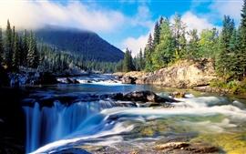 Cenário da natureza, floresta, abeto grosso, rio, rochas, cachoeiras, montanha