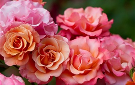 Pink rose flowers macro photography Wallpapers Pictures Photos Images