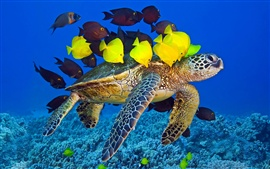 Preview wallpaper Sea turtle, ocean, underwater, yellow and brown fish