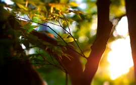 Preview wallpaper Summer, trees, bokeh, leaves, sunlight