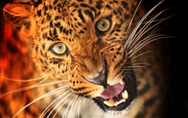 Animal de leopardo, cara, ojos, colmillos