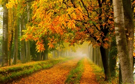 Preview wallpaper Autumn nature, park, forest, trees, yellow leaves, road