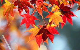 Preview wallpaper Autumn red leaves, nature scenery
