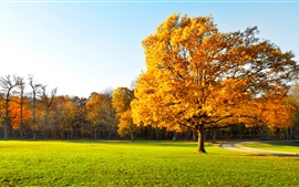 Autumn trees, beautiful garden, yellow leaves, green grass, sunlight