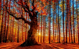 Preview wallpaper Beautiful autumn sunset forest, trees, red leaves