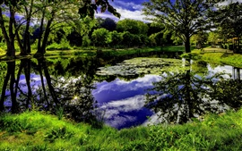 Beautiful nature, trees, grass, sky, clouds, pond, art pictures