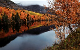 Canada, Newfoundland and Labrador, autumn, trees, river