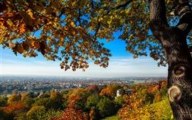 Dresde, Allemagne, colline, arbres, automne