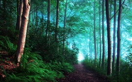 Preview wallpaper England, early morning forest, fog, blue