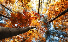 Preview wallpaper Forest autumn, trees, yellow leaves, sky, view to top