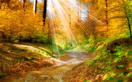 Preview wallpaper Golden autumn leaves, yellow, forest, trees, walkway, sunlight