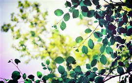 Preview wallpaper Green leaves, sunlight, bokeh