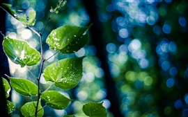Preview wallpaper Green nature, branch, leaves, bokeh