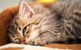 Kitten lying down to sleep