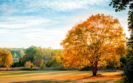 Preview wallpaper Landscape, nature autumn, trees, yellow leaves, blue sky