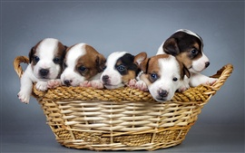 Preview wallpaper Many dogs, puppies, basket