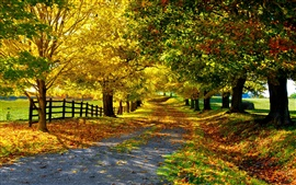 Nature autumn, yellow leaves, trees, road, fence
