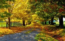 Природа осень, желтые листья, деревья, дорога, забор