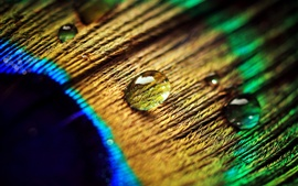 Peacock feather, water drops, macro photography