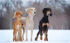 Three dogs in the snow winter