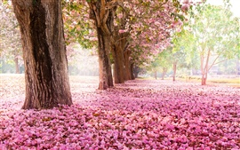 Trees, road, many pink flowers on the ground Wallpapers Pictures Photos Images