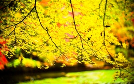 Yellow leaves, twigs, sun, blur