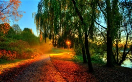 Beautiful autumn scenery, morning sunrise, trees, leaves, path