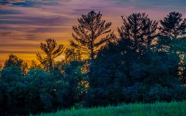 Canada, Ontario Province, meadow, trees, sunset