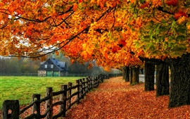 Preview wallpaper Colorful autumn, red leaves, path, grass, house