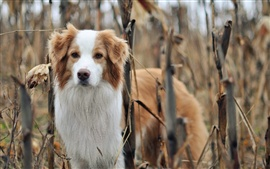 Preview wallpaper Dog at autumn nature forest