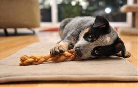 미리보기 배경 화면 개는 먹고 바닥에 누워