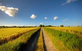 歩道、道路、晴れた日、フィールド、雲、夏