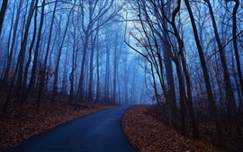 Forest trees, autumn morning, dawn, blue, fog, leaves, road