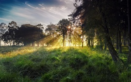Preview wallpaper Morning landscape, sky, rays, sun, grass, forest