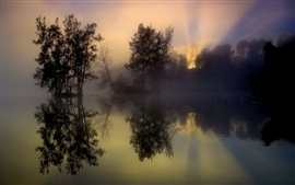 Morning sunrise, fog, trees, lake, water reflection