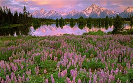 Preview wallpaper Mountains, lake, pink flowers, meadow, fields, water reflection, sunset
