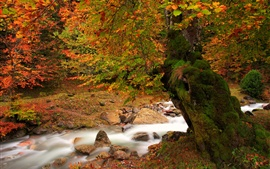Preview wallpaper Nature autumn landscape, river, tree, moss, red leaves