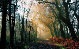Nature forest, morning, autumn, road, light rays, sun