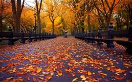 Aperçu fond d'écran New York, parc de l'automne, route à pied, banc, feuilles jaunes, des arbres