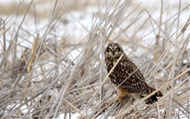 Preview wallpaper Owl in the grass at winter