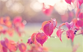 Pink leaves, autumn, dew