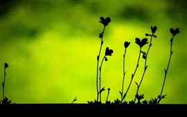 Plants leaves macro, black silhouettes, green background Wallpapers Pictures Photos Images