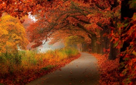 Preview wallpaper Red leaves, autumn, trees, road