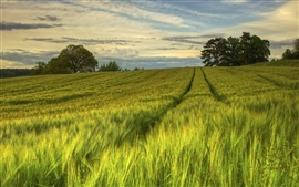Preview wallpaper Sweden, nature scenery, green fields, trees, evening, summer