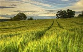 壁紙のプレビュー スウェーデン、自然の風景、緑の野原、木、夕方、夏