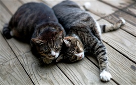 Preview wallpaper Two cats sleep at wooden board