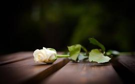 Белая роза на деревянной доске