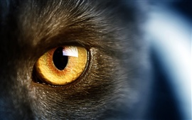 Preview wallpaper Wild black cat, yellow eyes, macro photography